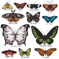 Diverse butterfly poster