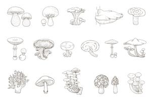 Drawing set of mushrooms