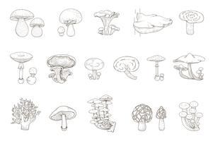 Jeu de dessin de champignons