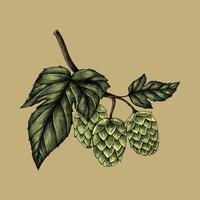 Illustration of fresh hops on a branch