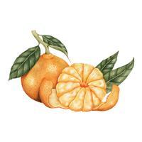 Estilo de desenho de ilustração de laranja
