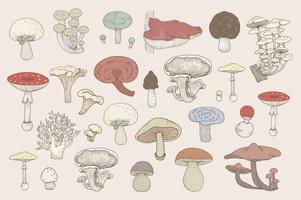 Jeu de dessin coloré de champignons