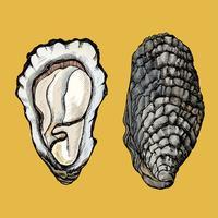 Hand drawn oyster salt-water bivalve