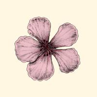 Ilustración de la flor de cerezo