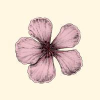 Abbildung der Kirschblüte