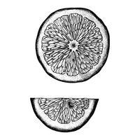 Dibujado a mano rodaja de limón