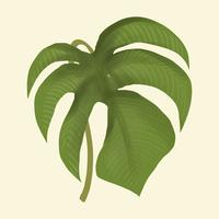 Feuille de plante dessinée à la main isolée