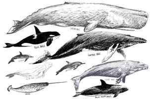 Illustration drawing style of whales collection