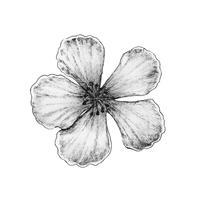 Handritad av sakura blomma