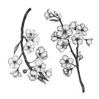 Main dessinée de fleur de sakura