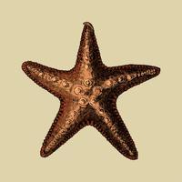 Handdragen havsstjärnor isolerade