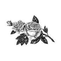 Dibujado a mano rosa aislado sobre fondo blanco