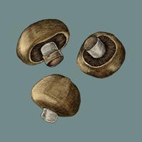 Illustratie van drie verse paddestoelen