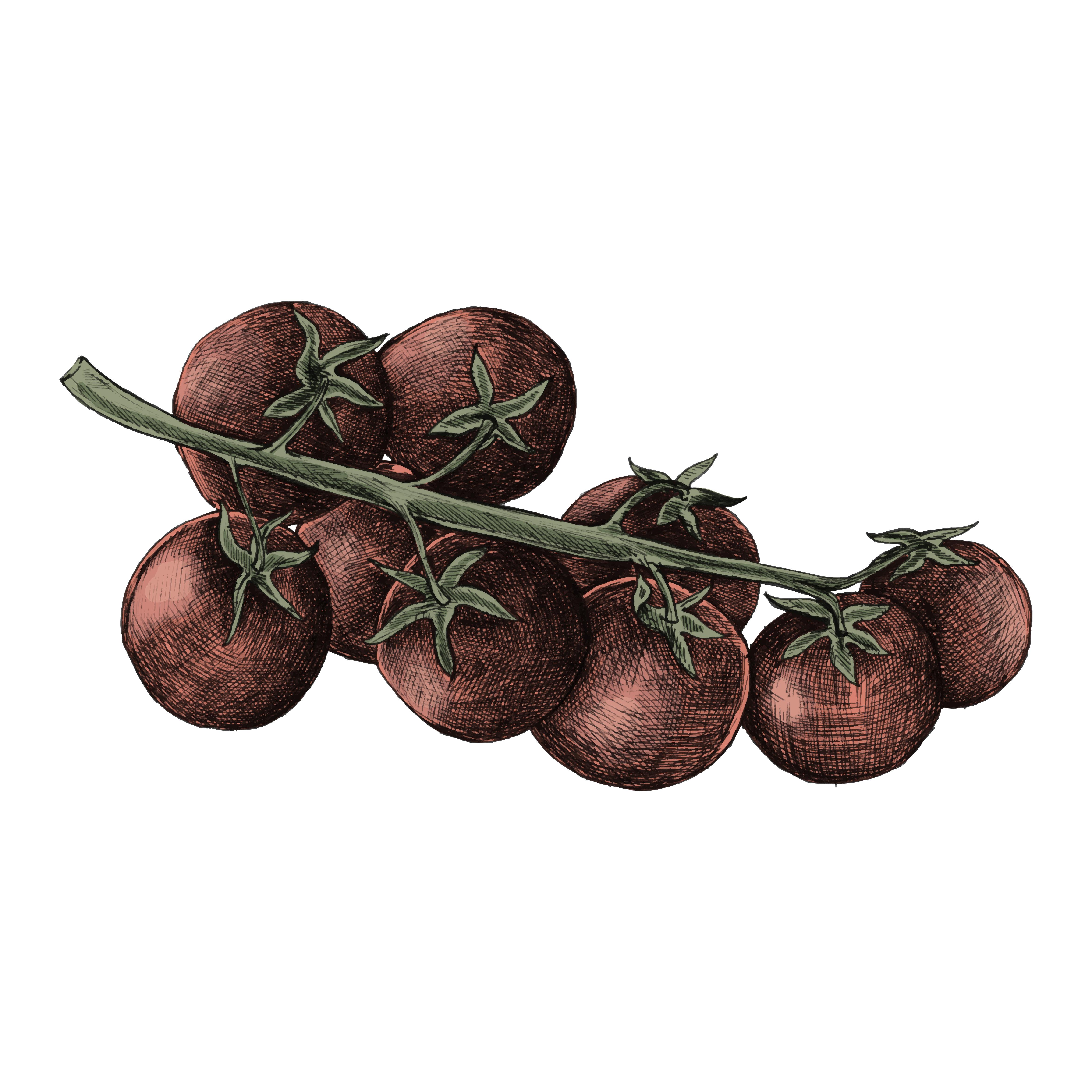 Illustration De Tomates Cerises Fraiches Telecharger Vectoriel