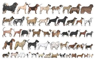 Illustration drawing style of dog breeds collection