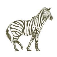 De stijl van de illustratietekening van zebra