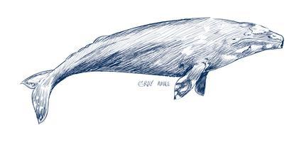 Style de dessin d'illustration de baleine grise