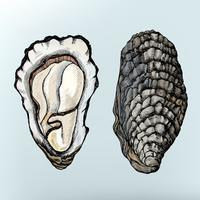 Mão desenhada bivalve de água salgada de ostra