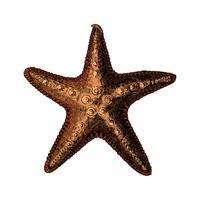 Hand drawn sea starfish isolated