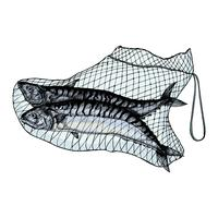 Hand drawn catched mackerels on the net