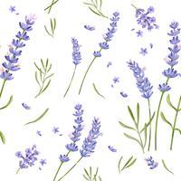 Dibujado a mano patrón de flores de lavanda