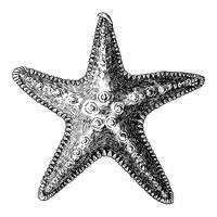 Étoile de mer dessiné à la main isolé
