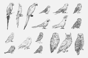Style de dessin d'illustration de la collection d'oiseaux perroquet