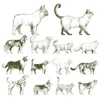 Illustration drawing style of animals collection