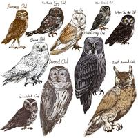 Diverse owls poster