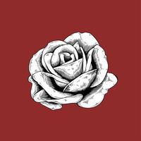 Rosa dibujo flor naturaleza vector icono sobre fondo rojo
