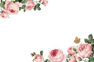 Handdragen rosa rosor ram på vit bakgrund vektor
