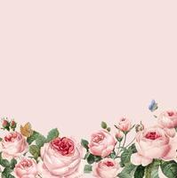 Cadre de roses roses dessinés à la main sur le vecteur de fond rose pastel