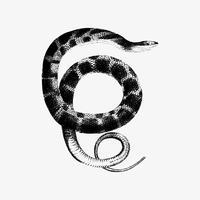 Desenho de sombra de cobra de água