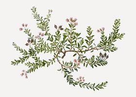 Azalea alpina in fiore