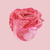 Abbildung der zeichnenden roten rosafarbenen Blume
