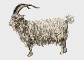 Goat in vintage style