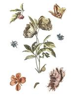 Weinleseillustration von verschiedenen Blumen und von Gleiskettenfahrzeug
