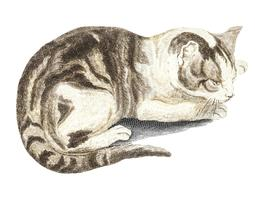 Vintage illustration of a cat
