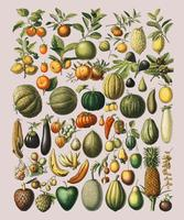 A vintage illustration of a wide variety of fruits and vegetables from the book, Nouveau Larousse Illustre (1898), by Larousse, Pierre, Augé and Claude, Digitally enhanced by rawpixel.