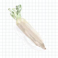 Hand drawn vegetable watercolor style