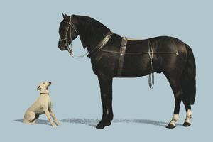 Orloffer (Orloff Horse) av Emil Volkers (1880), en illustration av en svart häst och en vit hund. Digitalt förbättrad av rawpixel.