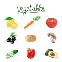 Hand drawn vegetables watercolor style
