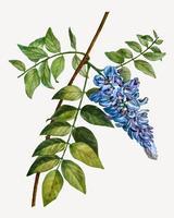 Albero di fagiolo fiorito
