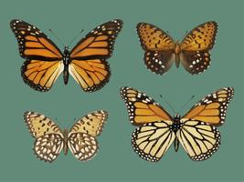 Monarch Butterfly (Danais Archippus) from Moths and butterflies of the United States (1900) by Sherman F. Denton (1856-1937). Digitally enhanced by rawpixel.