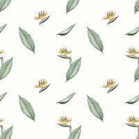 Ilustração de flor ave do paraíso