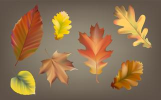 Collection of autumn leaves vector