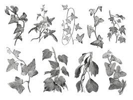 Illustration de plantes et de feuilles vintage