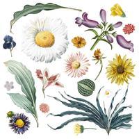 Blommig bakgrundsmönster