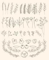 Vecteur, ensemble, bannière floral