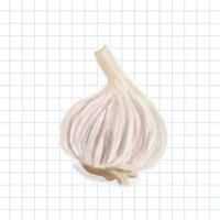 Hand drawn garlic watercolor style